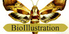 BioIllustration's avatar