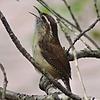 BirdLadyJ's avatar