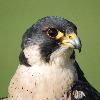birdman9999's avatar