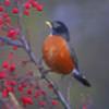 Birdy81's avatar