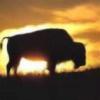 bison1967's avatar