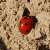 black-ladybird's avatar