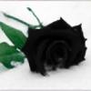 Black-Rose45's avatar