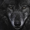 BlackAngelWolf45's avatar