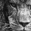 blackd13's avatar