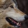 BlackFox5548's avatar