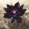 BlackLillyLotus's avatar