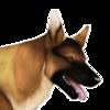 BlackmoreKennels's avatar