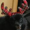 Blackpomers's avatar