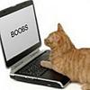 BladeStarOfficial's avatar