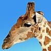 BLAXXULTIMATE's avatar