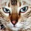 blazinqmoon's avatar