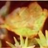 bleedingcolor's avatar