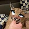BlinkeuBlink's avatar