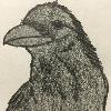 blitzer99's avatar