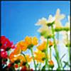Bloom-Flakes's avatar