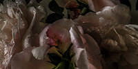 Blooming-Poets