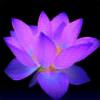 BlooSkull's avatar
