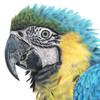 blue-birdie-drawings's avatar
