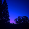 Blue-MoonCrystal's avatar