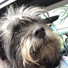 bluedowny's avatar