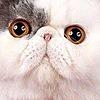 blueeyesblackcat's avatar