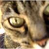 BluesMcCrow's avatar