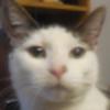 Bluestar20337's avatar
