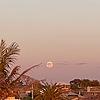 BlueTheDragonCat's avatar