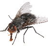 bluntspork1's avatar