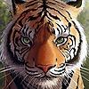 bmspire's avatar