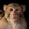 bob199889's avatar