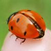 Bohofairy89's avatar