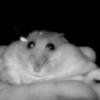 boo1256's avatar
