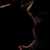 Booalreem's avatar