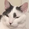 boofy15's avatar