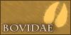 Bovidae