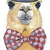 bowtie-lama's avatar
