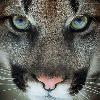 BrackenStorm268's avatar