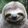 bradipo86's avatar