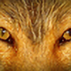Bravefox21's avatar