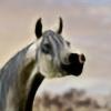 BrayleeStock2001's avatar