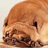 BreadDoggoPug's avatar