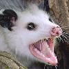 BreezePleeze's avatar