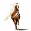 Breyer-Lover25's avatar