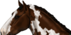 Bristolhorse's avatar