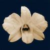 broken-orchid's avatar