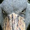 BROM-ZS's avatar