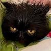 brookealexandra's avatar