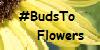 BudsToFlowers